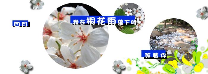 2015台中桐花季