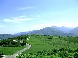 高台觀光茶園(照片一)