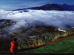 高台觀光茶園(照片二)