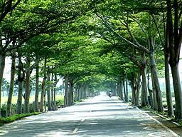 武陵綠色隧道(圖一)