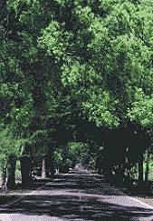 武陵綠色隧道(圖二)