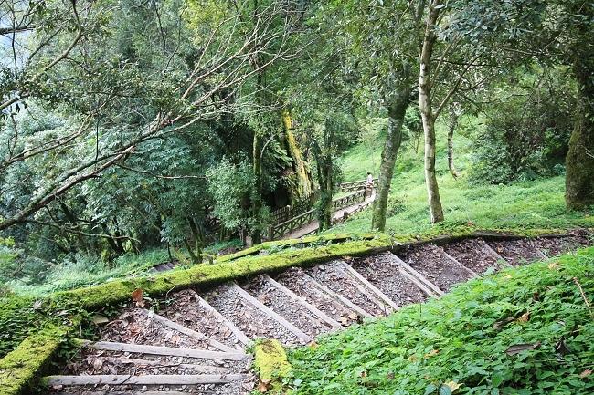 鹿林神木木棧道