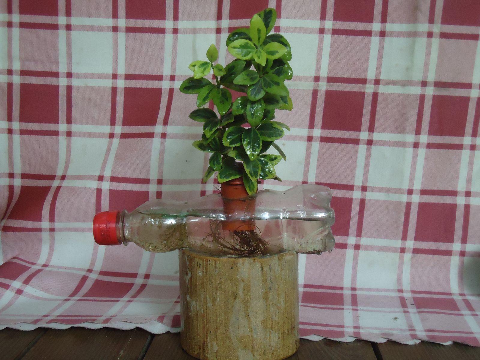 環保生態瓶