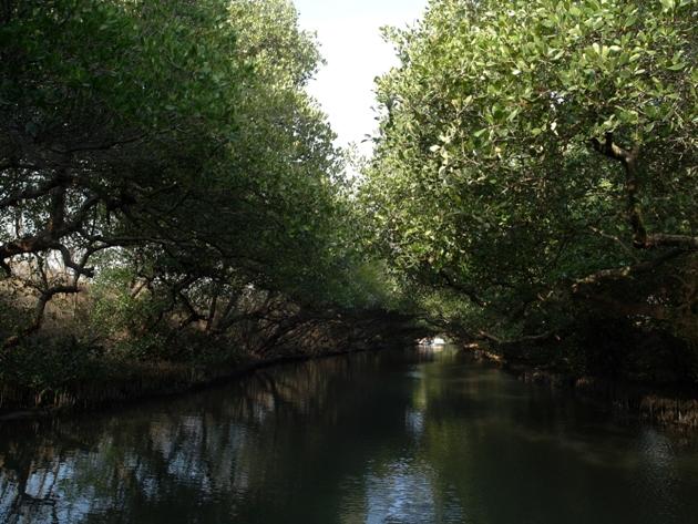 """属於树枝浓密树叶较少的部份   眼前这两棵搭起来的树被称为""""撞圆树"""""""