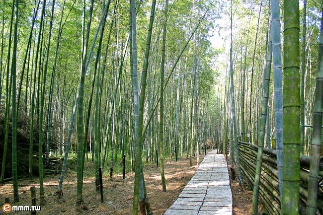 溪頭景點-長源圳步道