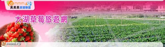 大湖草莓旅遊網