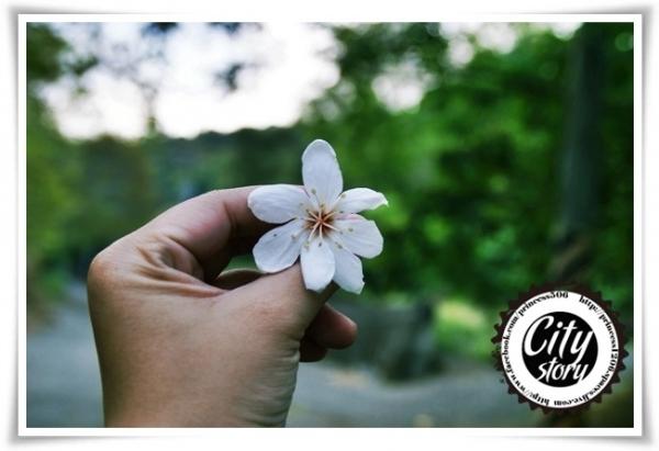 桐花一朵朵